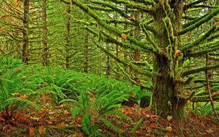 Бесплатные фото лес, деревья, ветки, мох, листья, трава, природа