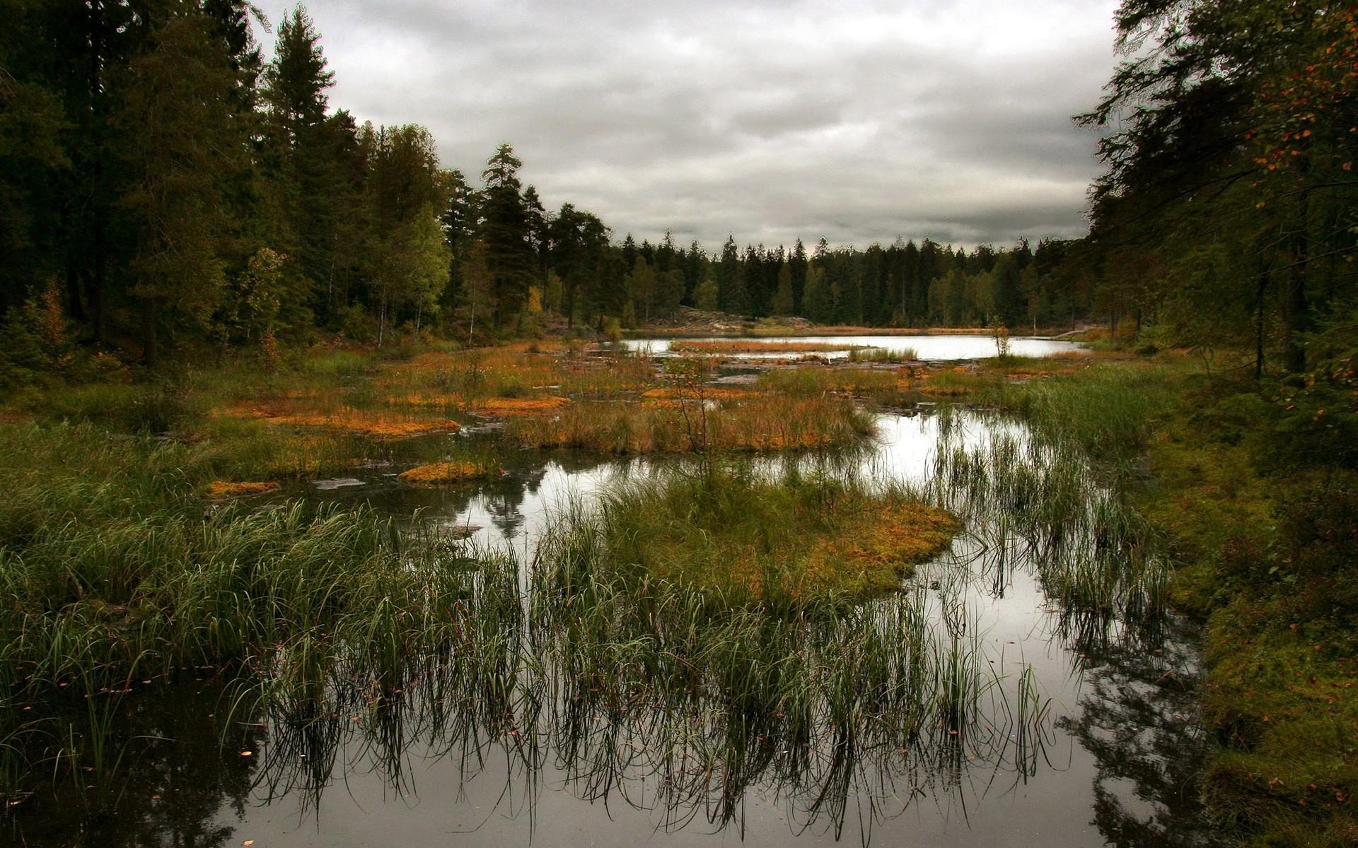 лес, вода, болото