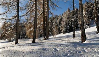 Фото бесплатно лес, зима, снег