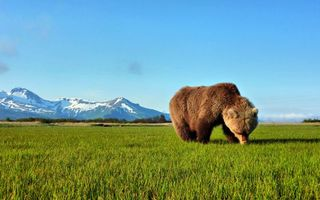 Бесплатные фото медведь,бурый,шерсть,трава,горы,небо,животные