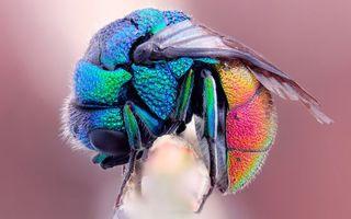 Бесплатные фото муха,цветная,крылья,лапы,глаза,большие,черные