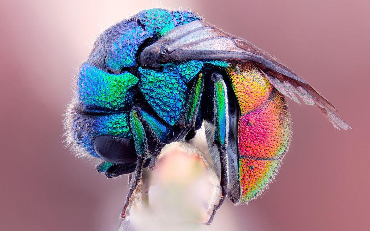 Фото бесплатно муха, цветная, крылья - на рабочий стол