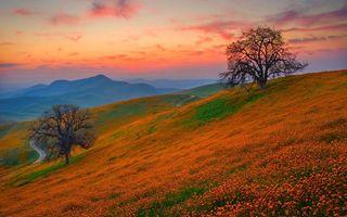 Фото бесплатно осень, поле, цветы, трава, деревья, дорога, горы, небо, пейзажи