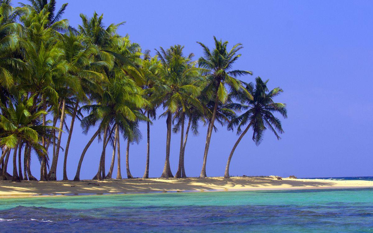 Фото бесплатно пальмы, небо, голубое, море, океан, вода, тепло, отдых, юг, природа, природа