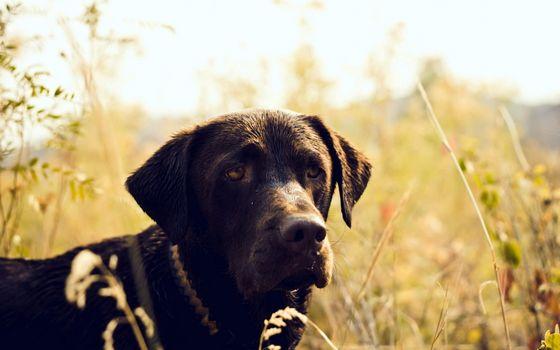 Photo free dog, sad, boring