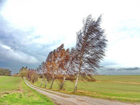 Заставки поле,дорога,деревья,берёзы,ветер,пейзаж