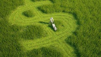 Фото бесплатно поле, трава, доллар
