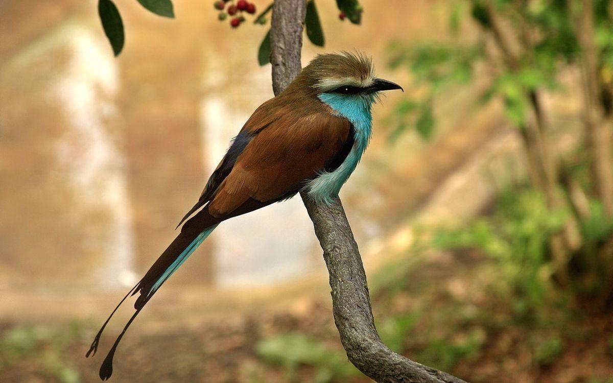 Free photo bird, sits, branch - to desktop