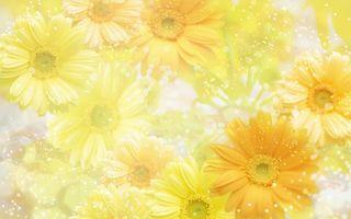 Фото бесплатно ромашки, герберы, листья