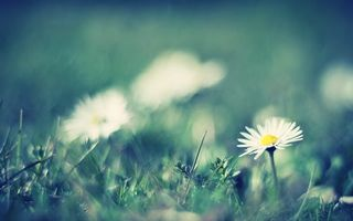 Бесплатные фото ромашки,зелень,трава,лепестки,стебель,поле,лужайка