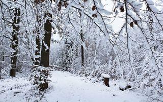 Бесплатные фото зима, тропинка, в снегу, лес, сумерки, природа