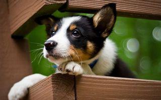 Бесплатные фото щенок,морда,лапы,шерсть,бруски,забор