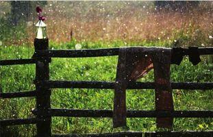 Заставки штаны, дождь, дерево, цветы, трава, природа