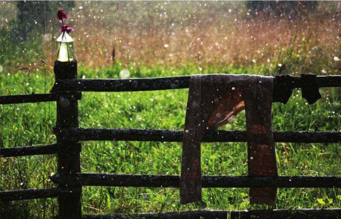 Обои штаны, дождь, дерево, цветы, трава, природа на телефон | картинки природа