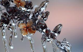 Фото бесплатно ветка, листья, лед