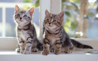 Бесплатные фото light, котята, 2560x1600, kitties, look, свет, кошки