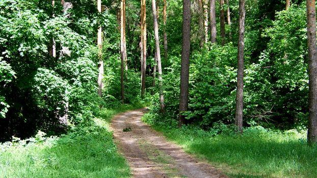 Photo free trees, path, nature trail