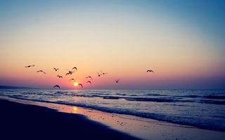Бесплатные фото берег, море, океан, вода, волны, птицы, чайки