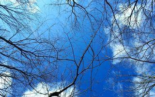 Бесплатные фото деревья,ветви,небо,облака