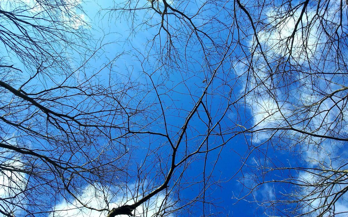 Фото бесплатно деревья, ветви, небо - на рабочий стол