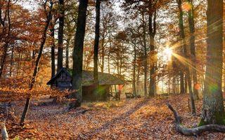 Бесплатные фото домик,лес,деревья,листья,осень,природа