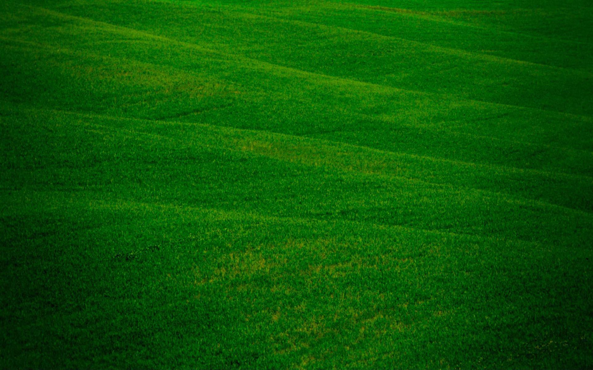трава, рисунки, зелень
