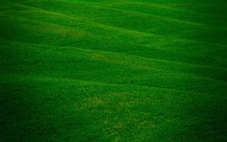 Заставки трава, рисунки, зелень
