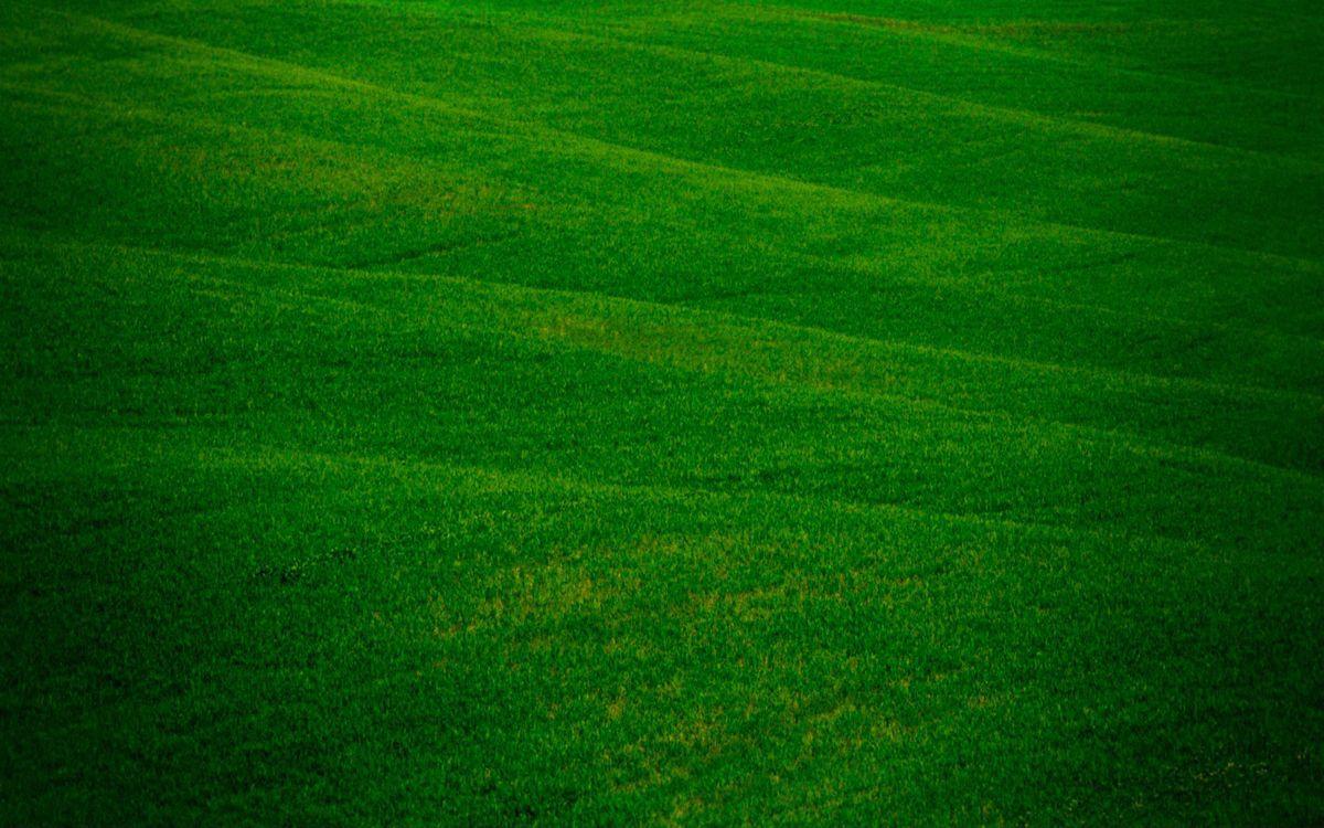 Фото трава рисунки зелень - бесплатные картинки на Fonwall