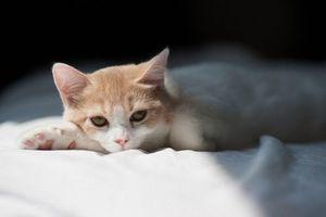 Бесплатные фото кот,рыжий,белый,котенок,лежит,кровать,шерсть