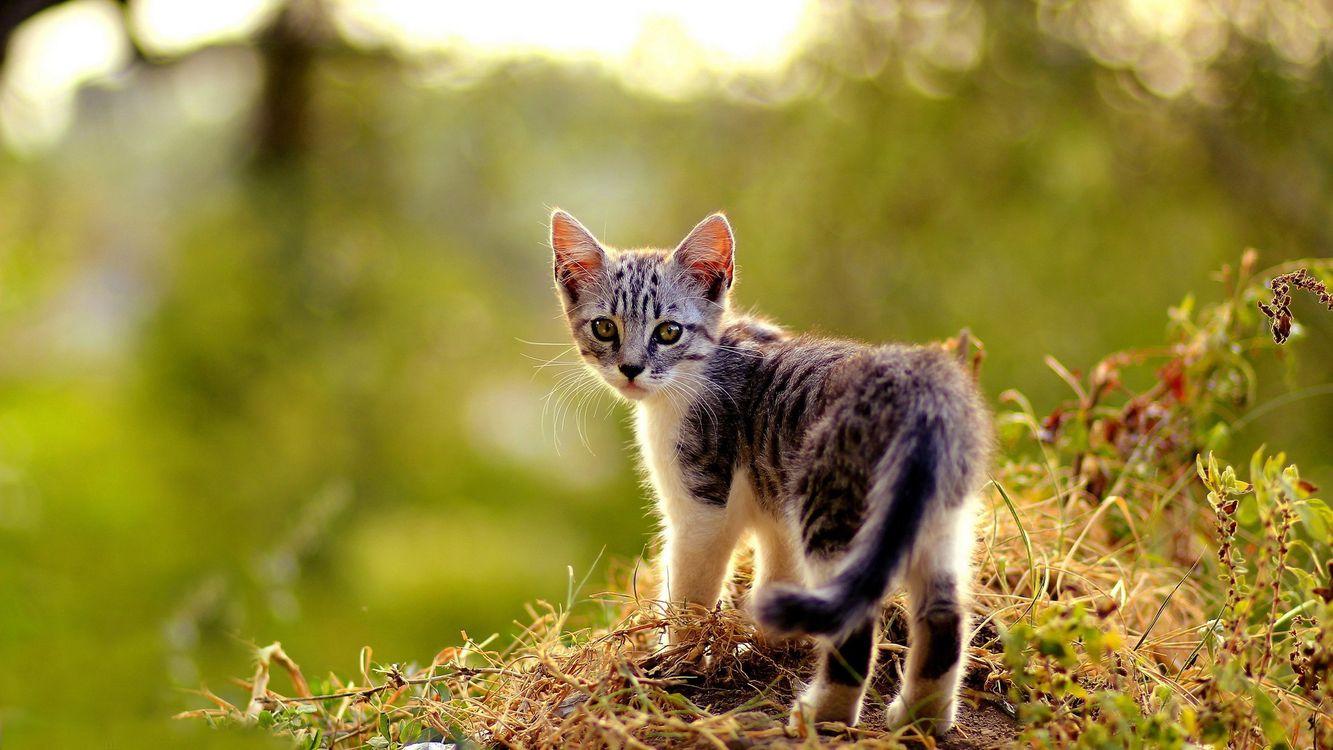Фото бесплатно котенок, кот, маленький, пушистый, шерсть, пух, хвост, лапы, глаза, усы, нос, трава, листья, зелень, кошки, кошки - скачать на рабочий стол