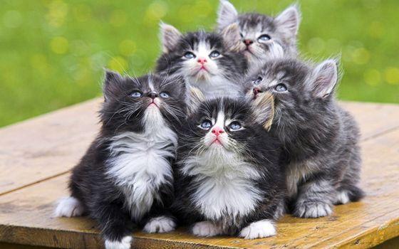 Заставки котята, пушистые, мордочки