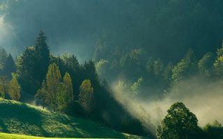 Фото бесплатно лес, природа, влажности