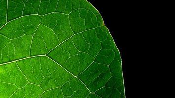 Заставки лист,зеленый,сочный,прожилки,фон,черный,текстуры