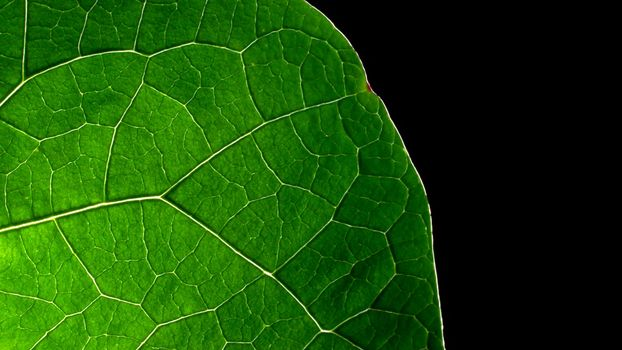 Бесплатные фото лист,зеленый,сочный,прожилки,фон,черный,текстуры