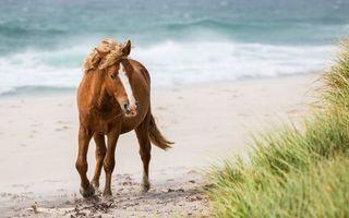 Фото бесплатно лошадь, грива, хвост