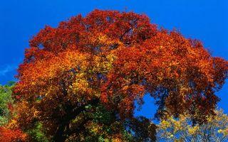 Фото бесплатно небо, лес, красиво