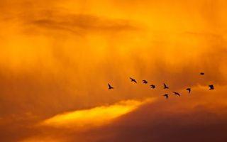 Бесплатные фото небо,облака,чайки,голуби,вороны,полет,стая