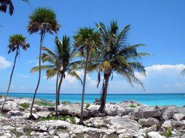 Фото бесплатно пальмы, океан, песок