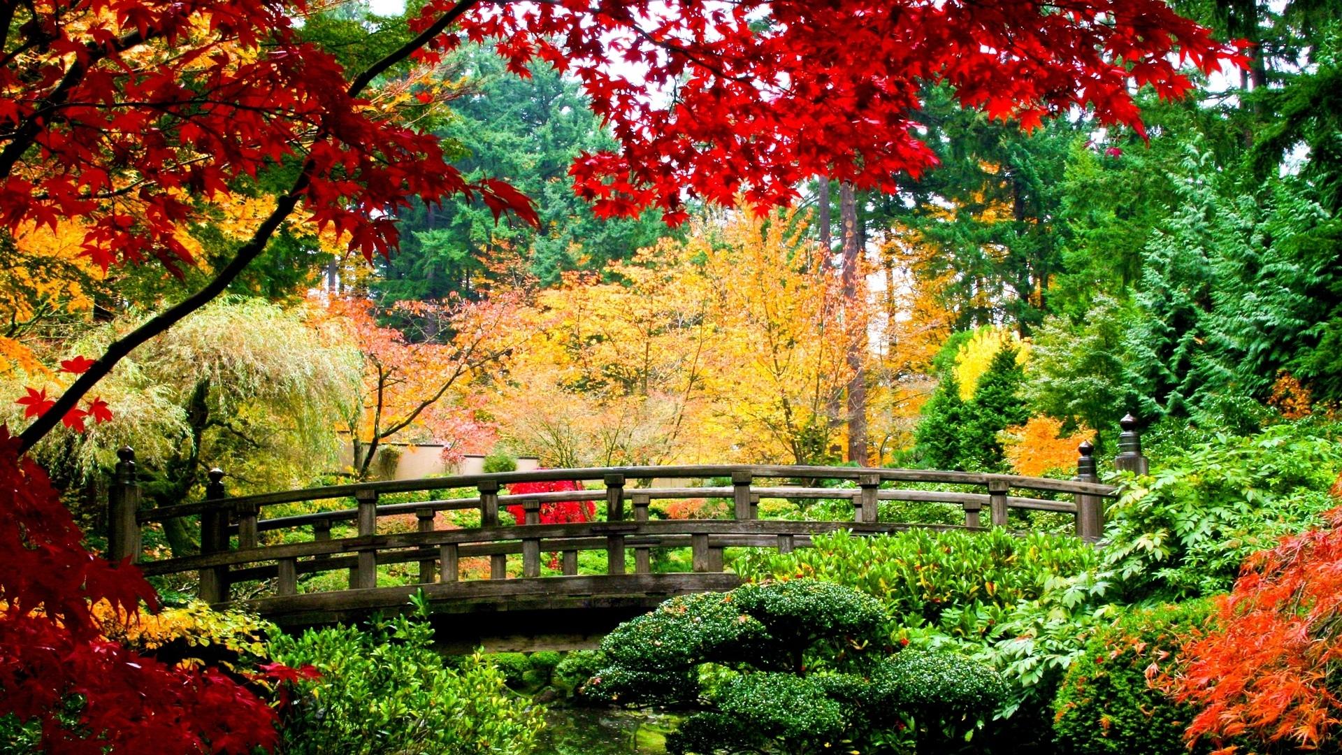 Обои осень, мост, ручей, листья