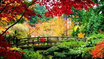 Бесплатные фото осень,мост,ручей,листья,зелень,деревья,небо