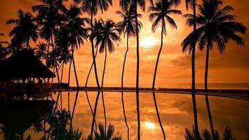 Photo free palms, water, sunset