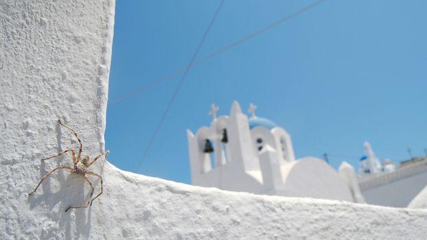 Бесплатные фото паук,здание,белое,старое,колокол,провода,насекомые