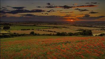 Фото бесплатно пейзажи, цветы, солнце