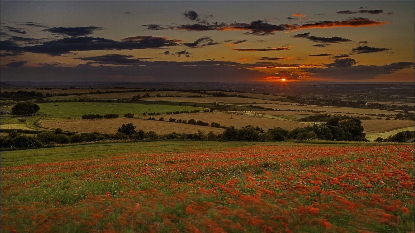 Фото бесплатно поле, цветы, красные, деревья, закат, солнце, пейзажи, пейзажи