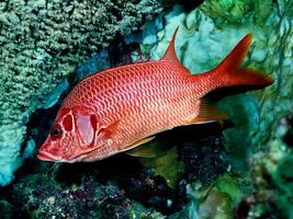 Фото бесплатно рыба, чешуя, красная