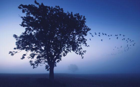 Бесплатные фото стая,полет,деревья,крона,туман,сумерки,птицы