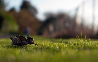 Фото бесплатно трава, листик, осень