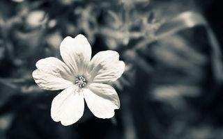 Фото бесплатно тычинка, лето, цветок