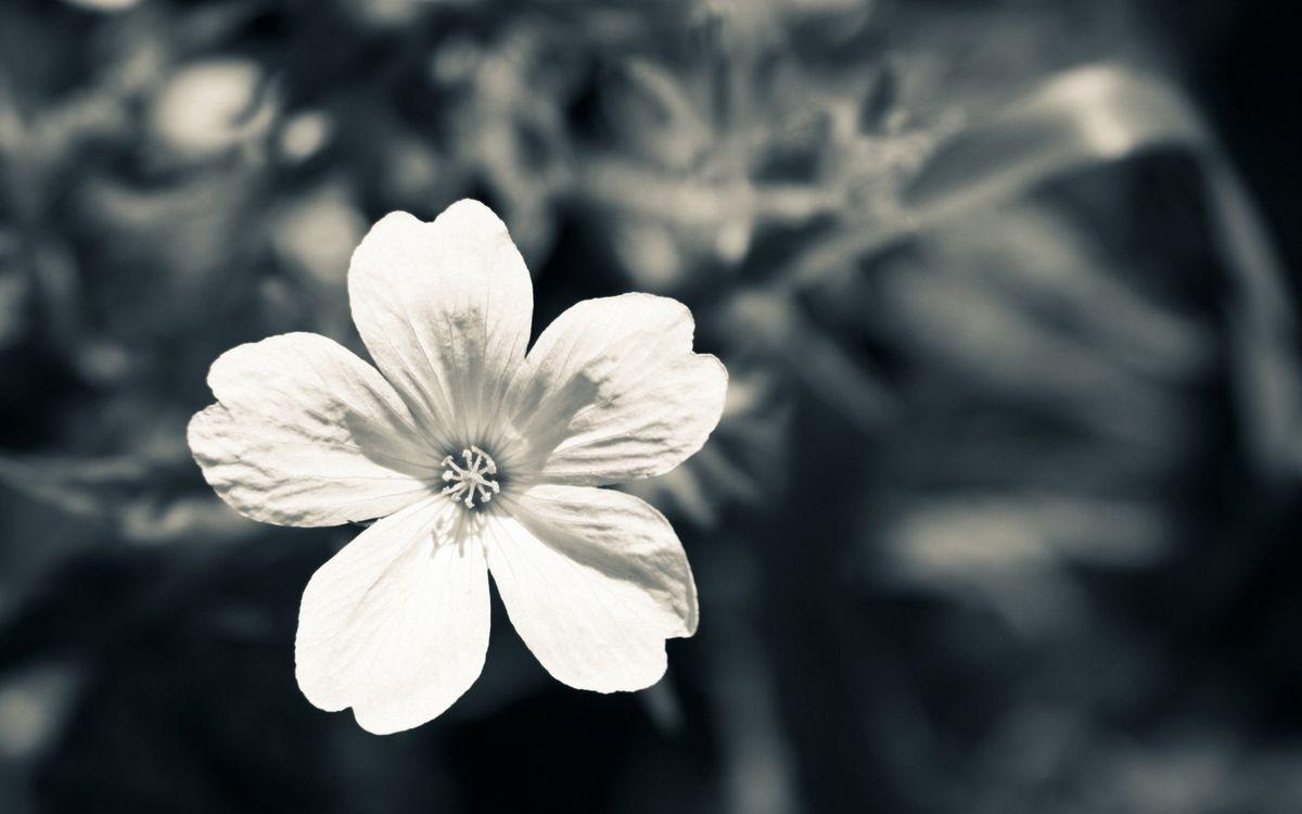 Фото бесплатно цветок, лепестки, серединка, тычинка, клумба, лето, тепло, букет, цветы, цветы