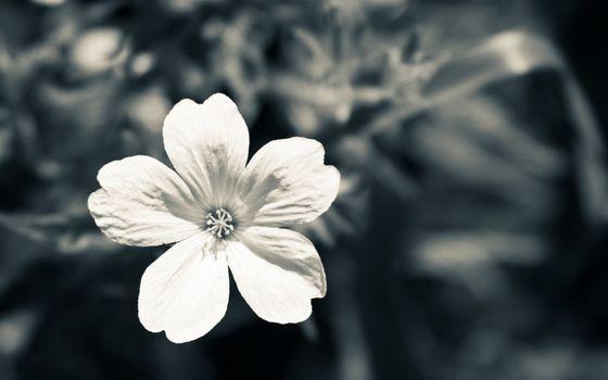 Бесплатные фото цветок,лепестки,серединка,тычинка,клумба,лето,тепло,букет,цветы